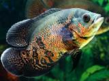 【发现好灯】养地图鱼不注意光照,分分钟变成石斑鱼