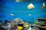 带感应可定时水族箱专用杀菌灯——观赏鱼的守护星