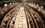 养殖场想获得更高效益,绝不可忽视的照明灯具选择!